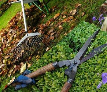 Bahçe Bakımı ve Temizliği