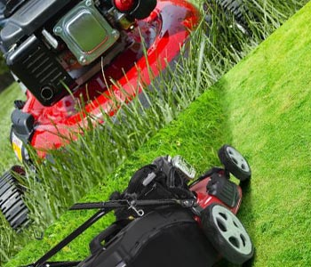 Özel bakım isteyen çim biçme, ot yolma gibi işlemler itinayla yapılmaktadır